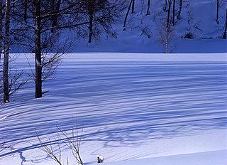 寒さ極まる二十四節気「大寒」。春待ちわびるころの第七十候「欵冬華(ふきのはなさく)」
